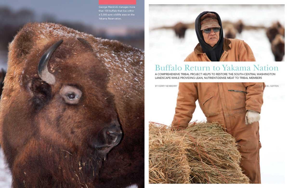 Buffalo Return to Yakama Nation